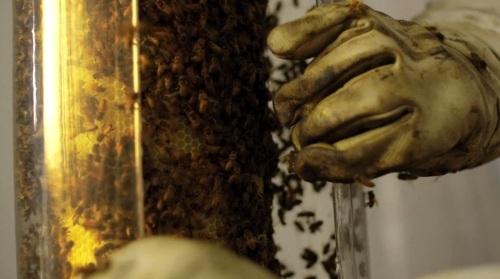 Bee_04